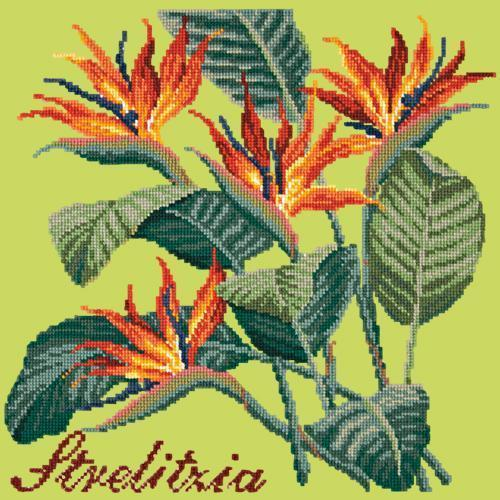 Strelitzia (Bird of Paradise) Needlepoint Kit Elizabeth Bradley Design Pale Lime