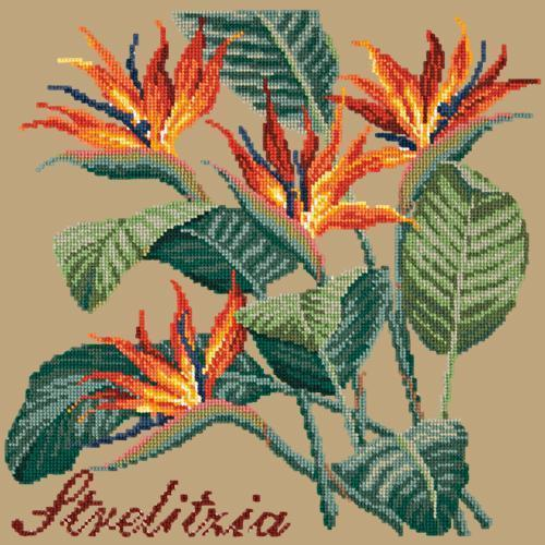 Strelitzia (Bird of Paradise) Needlepoint Kit Elizabeth Bradley Design Sand