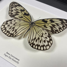 Load image into Gallery viewer, Paper Kite Butterfly (Idea Leuconoe)