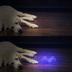 51 LED Ultraviolet  Flashlight for Dog Urine, Pet Stains and Bed Bug