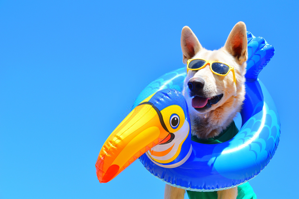 10 Super-Fun Products You Definitely Need Every Summer