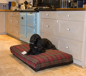 10 Reasons to Buy a Berkeley Dog Bed