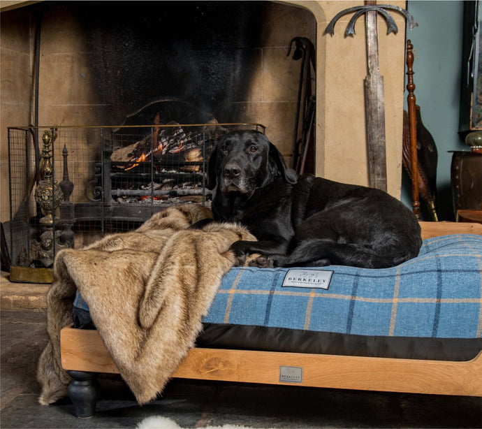 Berkeley Waterproof Orthopedic Dog Beds – Why are they so special?
