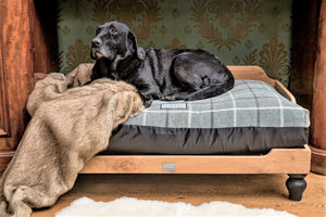 Berkeley Raised Wooden Dog Bed