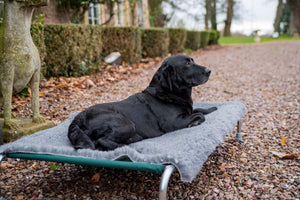 Berkeley Raised Dog Bed with Wool-Mix Vet Bed