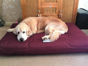 XL Orthopedic Dog Beds by Berkeley