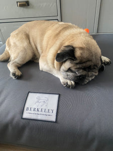 Orthopaedic Dog Bed Mattress by Berkeley