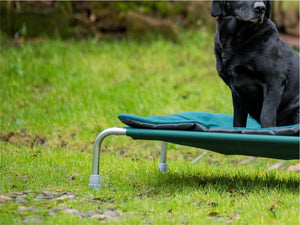 Raised Dog Bed Heavy Duty Feet by Berkeley