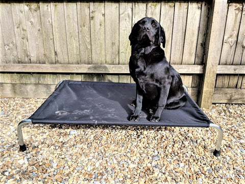 Heavy Duty Raised Dog Beds
