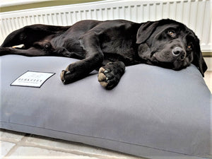 Orthopedic Dog Bed Mattress by Berkeley in Grey