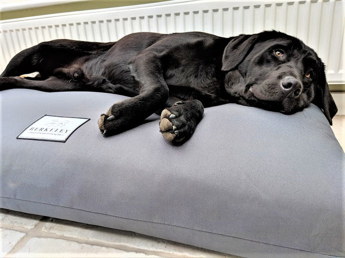 Waterproof Orthopedic Dog Bed Mattress by Berkeley in Grey