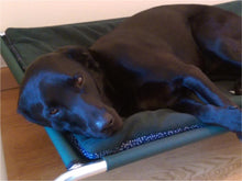 Load image into Gallery viewer, Elevated Dog Beds by Berkeley