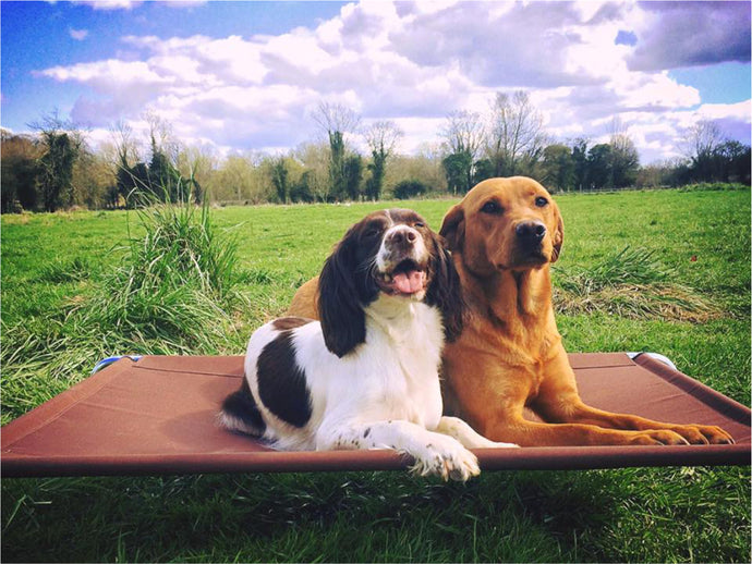 Raised Dog Beds - Made in the UK by Berkeley