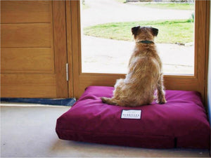 Small / Medium Orthopedic Dog Bed Mattress by Berkeley