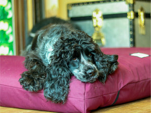 Orthopedic Dog Bed in Burgundy by Berkeley