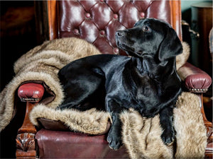 Faux Fur Luxury Dog Blankets by Berkeley