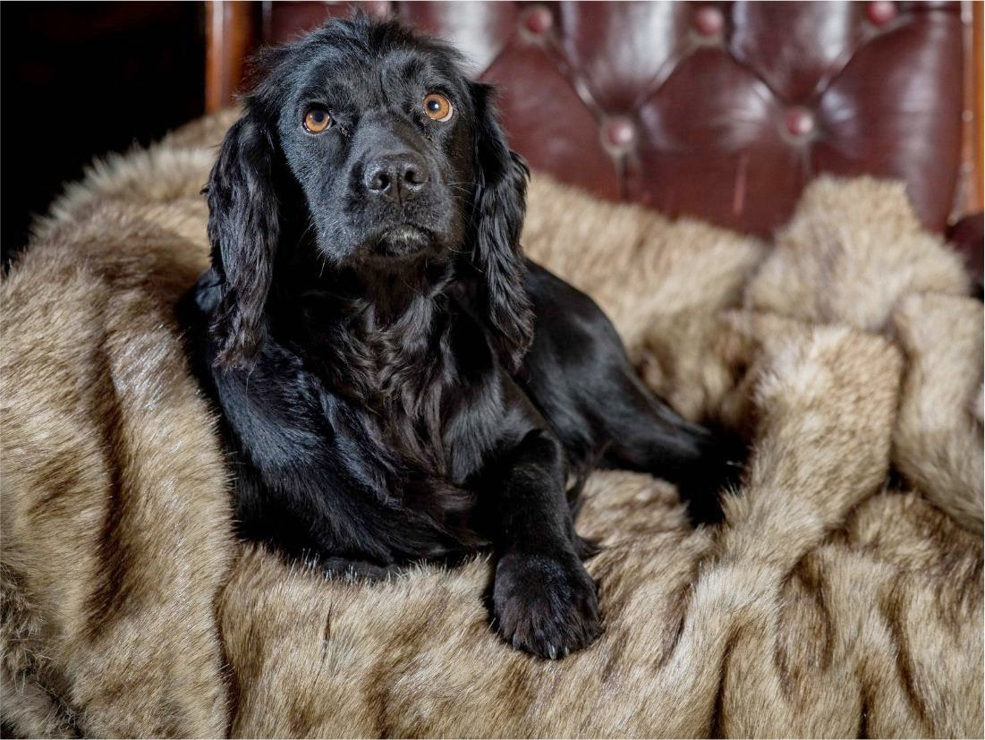Luxury Dog Bed Blankets by Berkeley