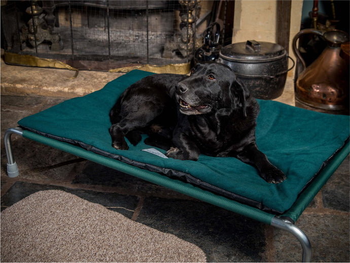 Raised Dog Bed fitted with Non-Slip Polar Fleece Pad by Berkeley