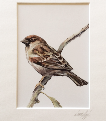 Tree Sparrow ♂ A5 Signed & Mounted Print