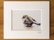 Little Hedge Sparrow A5 Signed & Mounted Print