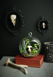 Framed Bat skull replica wall plaque