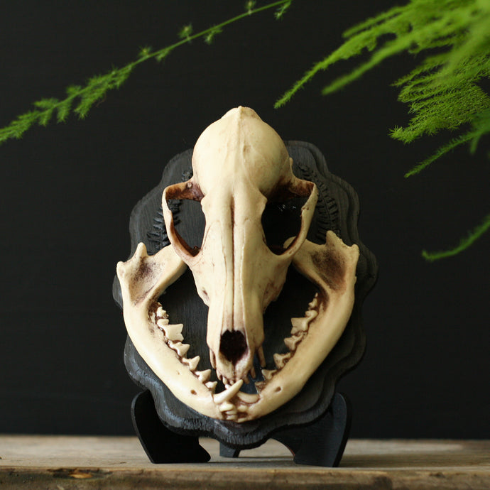 Fox Skull Wall Plaque