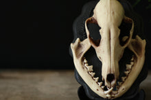 Load image into Gallery viewer, Fox Skull Wall Plaque