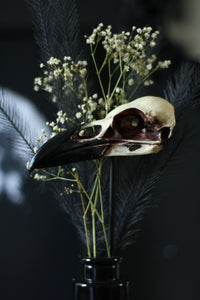 Bird Skull Floral Decorations Picks