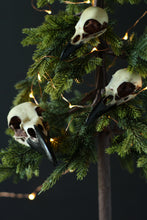 Load image into Gallery viewer, Corvid skull set of three - Raven, Crow and Magpie replicas