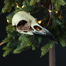 Load image into Gallery viewer, Detailed Raven Skull Replica