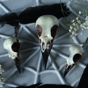 Bird skull hair accessories - Magpie Hair Clip - Blackbird and Song Thrush Bobby pins.