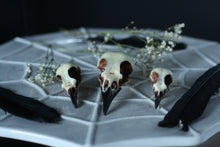 Load image into Gallery viewer, Bird skull hair accessories - Magpie Hair Clip - Blackbird and Song Thrush Bobby pins.