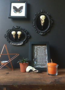 Framed Crow bird Skull resin replica wall plaque
