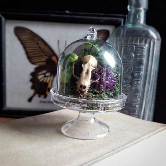 Bat Skull replica mini curio dome desk ornament unusal gift