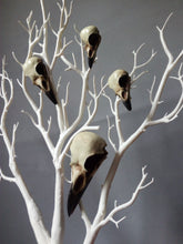 Load image into Gallery viewer, Corvidae skull collection and individual bird skulls