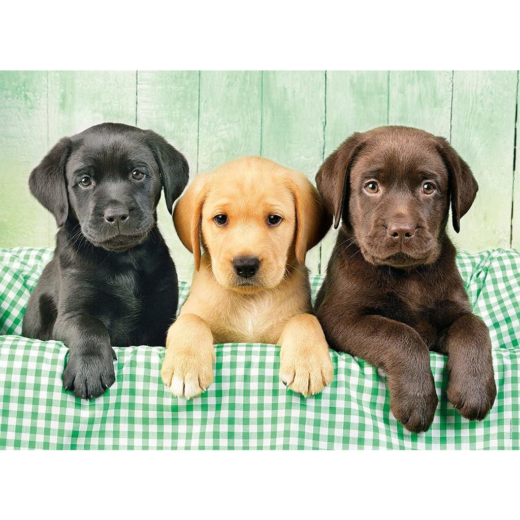 "High Quality, Labrador (Three labs) - 1000 pieces, Puzzle, Brand_Clementoni, Category_Puzzle, Collection_High Quality, Pieces_1000, Theme_Animals, ""board games"", ""Hobby Games"", Hobby Games"