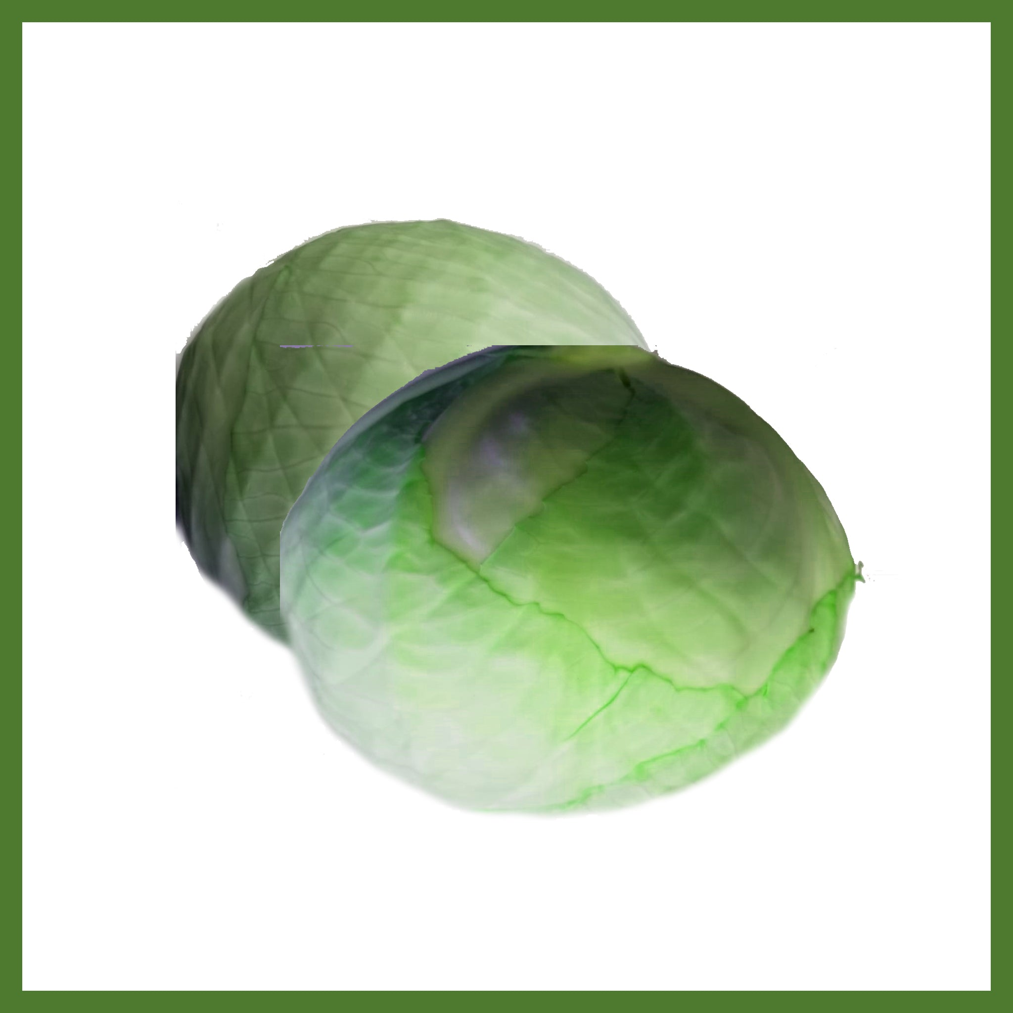 Green Cabbage /ea