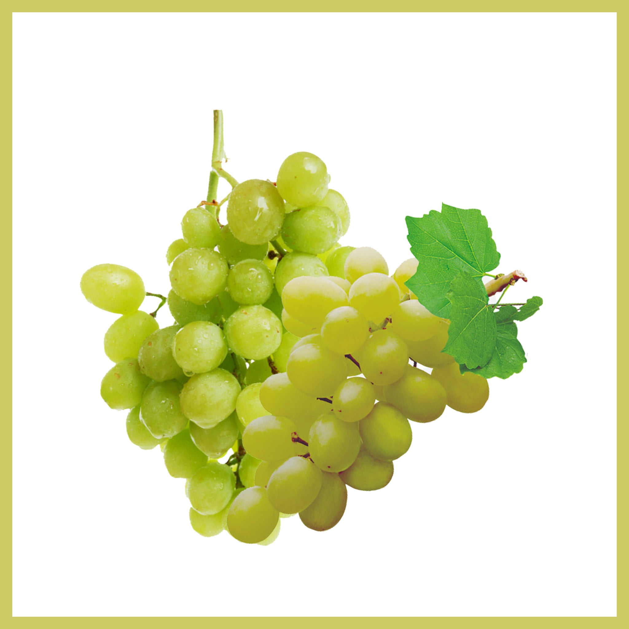 Green Seedless Grapes -انگور عسگری