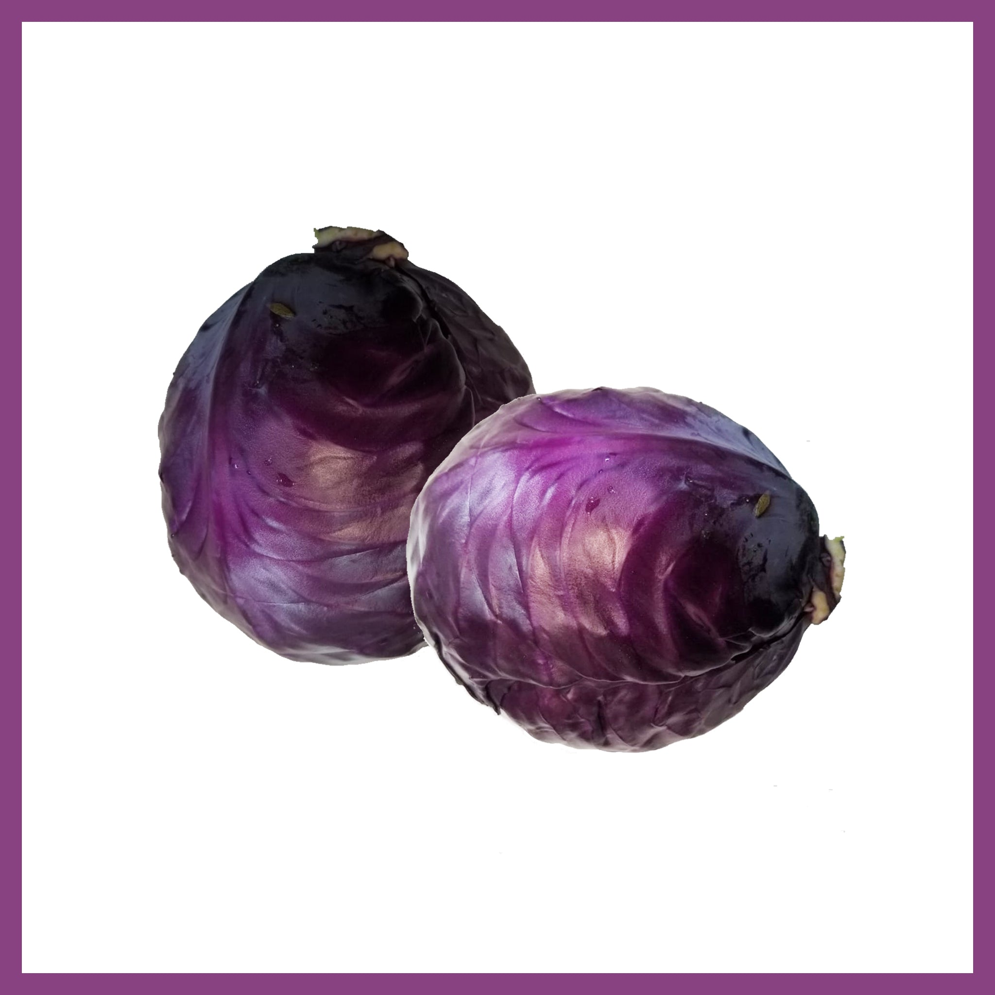 Red Cabbage /ea