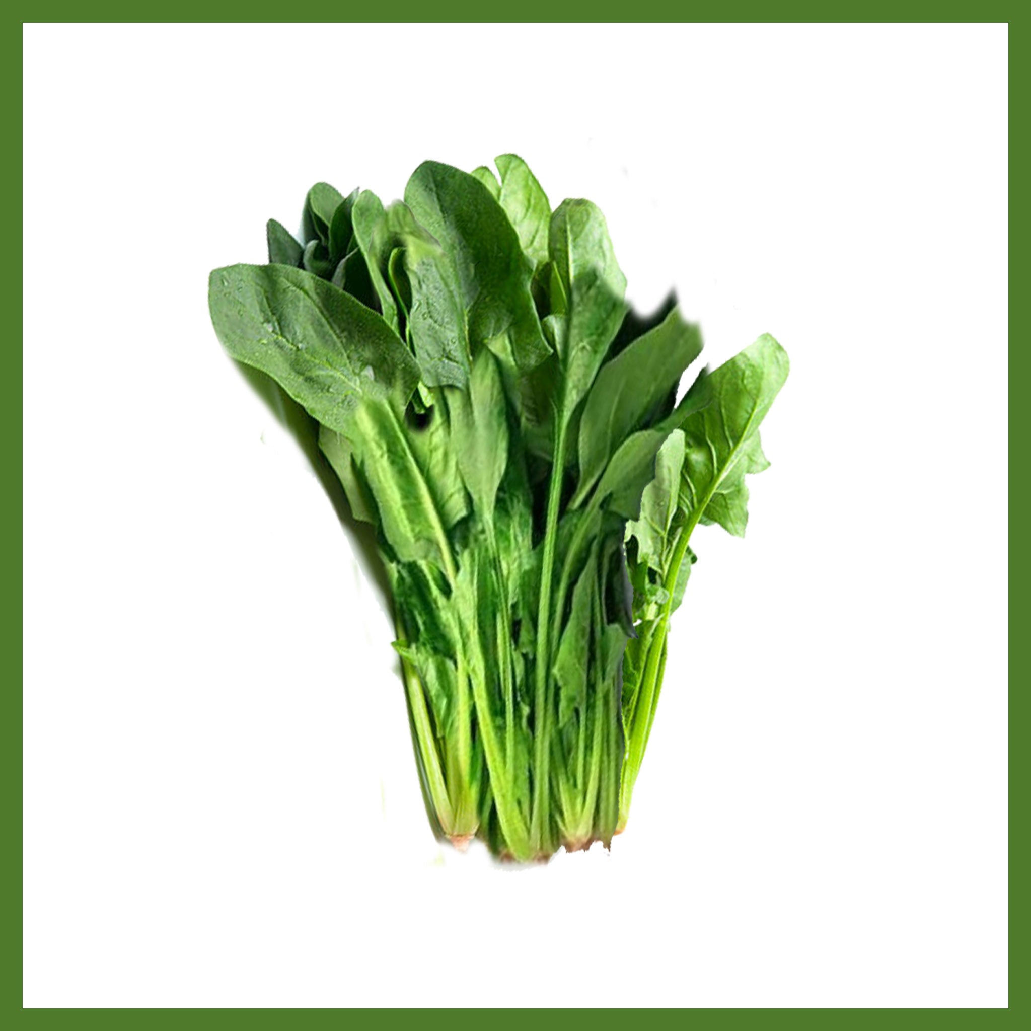 Spinach Bunched /EA