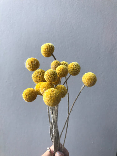 Billy Buttons Dried Floral 7-8 Stems