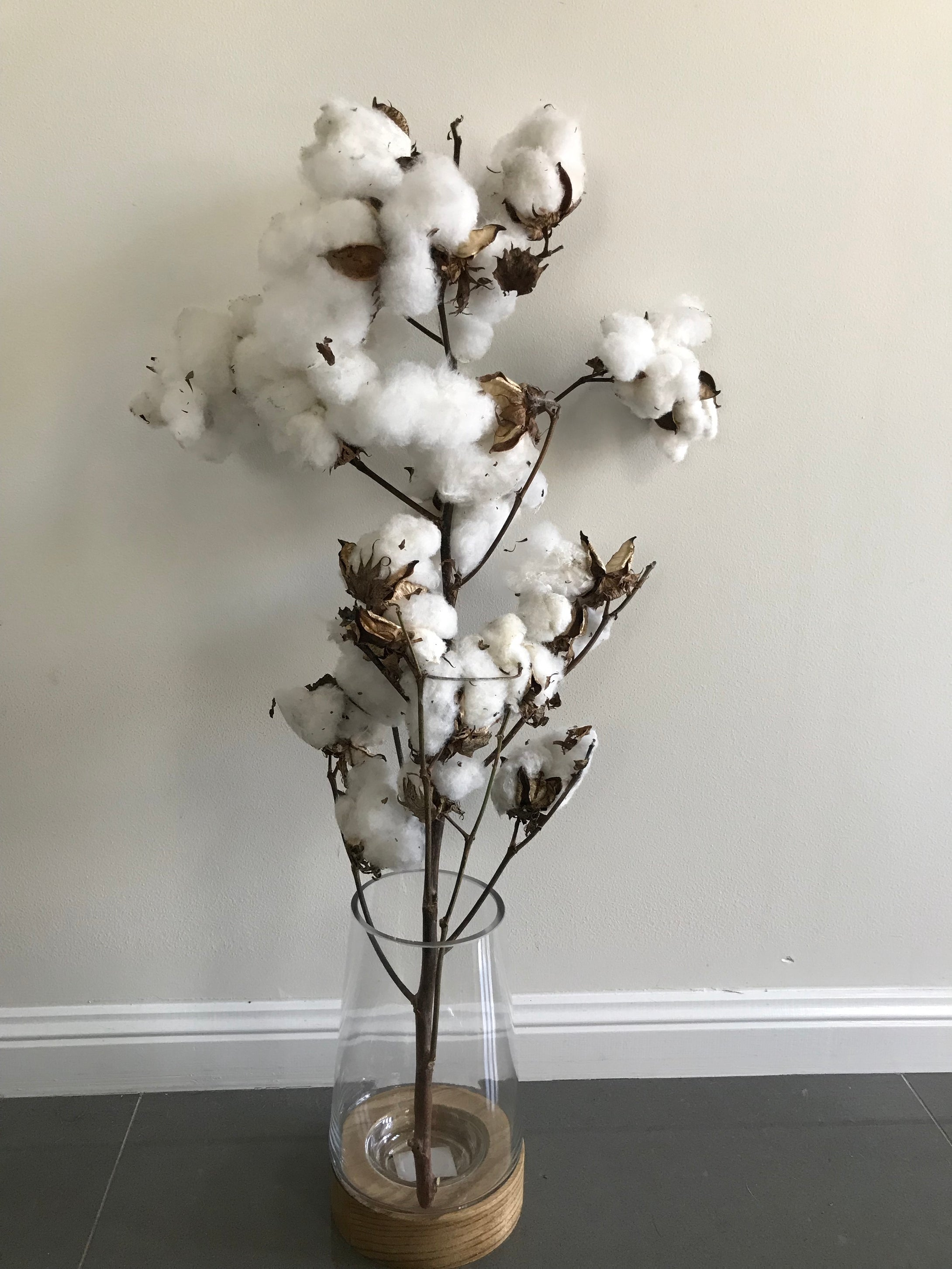 Cotton Stems 60cm $39