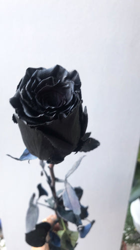Columbian Black Rose || Dried Flower
