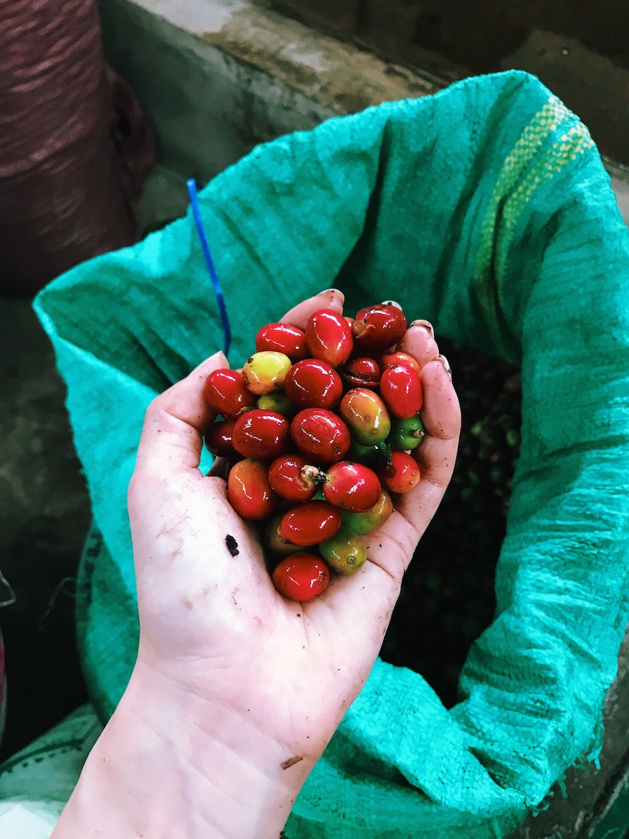 Get to Know Vietnamese Arabica Bourbon or Moka Coffee