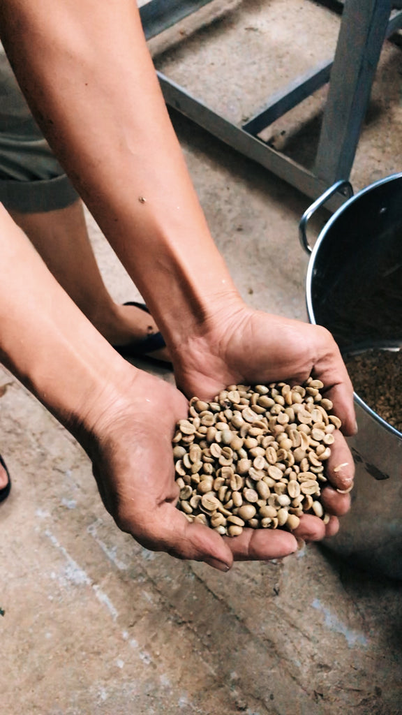 vietnamese coffee farm nguyen coffee supply single origin