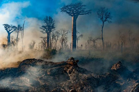 """Destroyed Baobab trees featured in Netflix """"Our_Planet"""" Series"""
