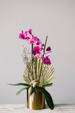 Potted Phalaenopsis Orchid Plant