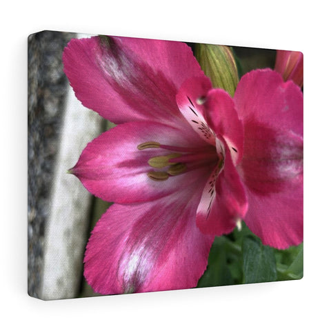 Peruvian Lily Canvas Gallery Wraps