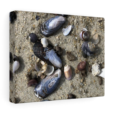 Seashell Canvas Gallery Wraps