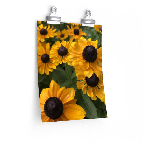 Sweet Black Eyed Susan Posters
